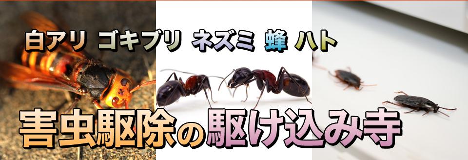 アリ ゴキブリ ネズミ 蜂 ハト 害虫駆除の駆け込み寺